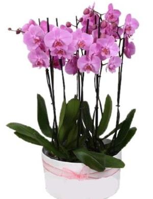 Beyaz seramik içerisinde 7 dallı mor orkide  Muş çiçekçi telefonları