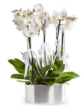 Beş dallı metal saksıda beyaz orkide  Muş çiçek yolla