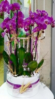 Seramik vazoda 4 dallı mor lila orkide  Muş online çiçek gönderme sipariş