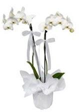 2 dallı beyaz orkide  Muş güvenli kaliteli hızlı çiçek