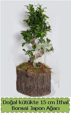Doğal kütükte İthal bonsai japon ağacı  Muş çiçek gönderme