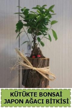 Kütük içerisinde doğal bonsai ağacı  Muş çiçekçi telefonları