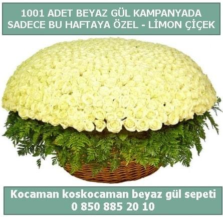 1001 adet beyaz gül sepeti özel kampanyada  Muş çiçek gönderme sitemiz güvenlidir