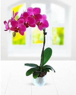 Tek dallı mor orkide  Muş çiçek satışı