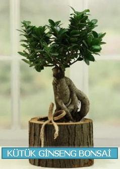 Kütük ağaç içerisinde ginseng bonsai  Muş çiçek gönderme sitemiz güvenlidir