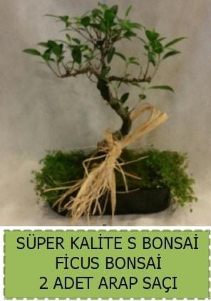 Ficus S Bonsai ve arap saçı  Muş çiçekçi telefonları