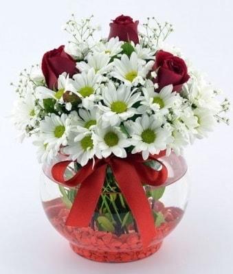 Fanusta 3 Gül ve Papatya  Muş internetten çiçek satışı