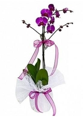 Tekli Mor Orkide  Muş çiçek yolla