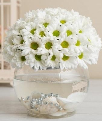 Fanusta beyaz Papatya  Muş çiçek satışı