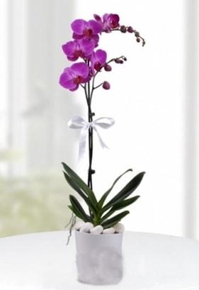 Tek dallı saksıda mor orkide çiçeği  Muş çiçekçiler