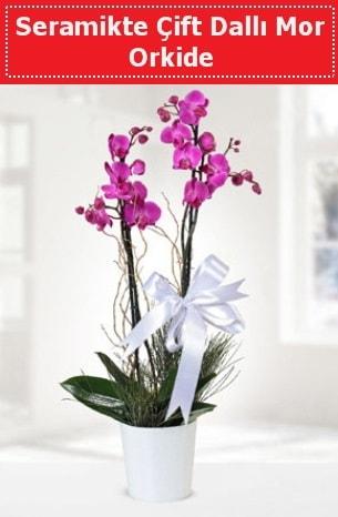 Seramikte Çift Dallı Mor Orkide  Muş anneler günü çiçek yolla