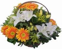 Muş online çiçekçi , çiçek siparişi  sepet modeli Gerbera kazablanka sepet