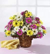 Muş çiçekçiler  Mevsim çiçekleri sepeti